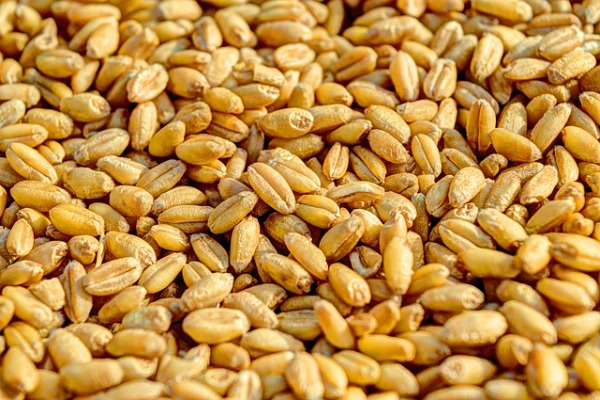 Healthy Indian food to stay fit Wheat Atta